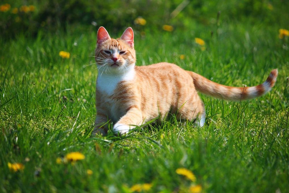 Dla kota przybywającego na dworze jest więcej czynników mogących powodować kichanie.