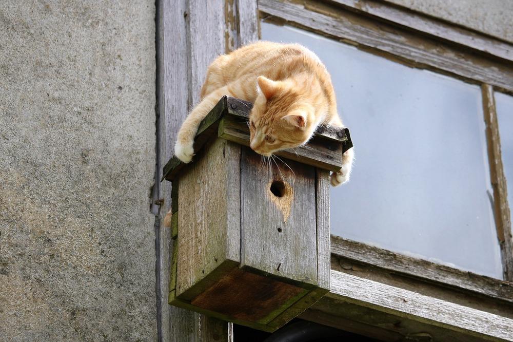 Kot nie spada na cztery łapy. Należy zabezpieczyć okna i balkony siatkami.