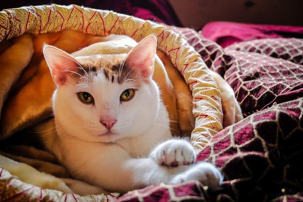 Kleszcze przenoszą wiele chorób. Psy oraz koty wychodzące na dwór należy zabezpieczyć przed pasożytami zewnętrznymi.