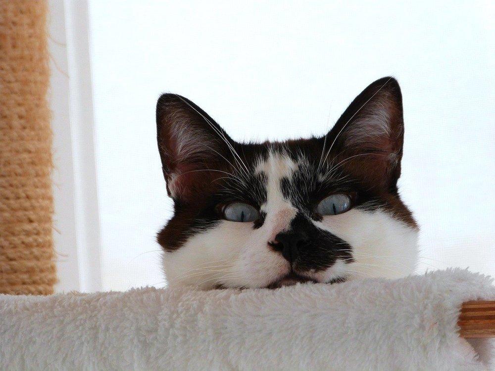 Nawet najlepiej wychowany kot nie pozbędzie się instynktu. W wielu wypadkach właściwym postępowaniem nie jest próba nauczenia pupila pożądanych zachowań, lecz np. odpowiednie zorganizowanie przestrzeni.