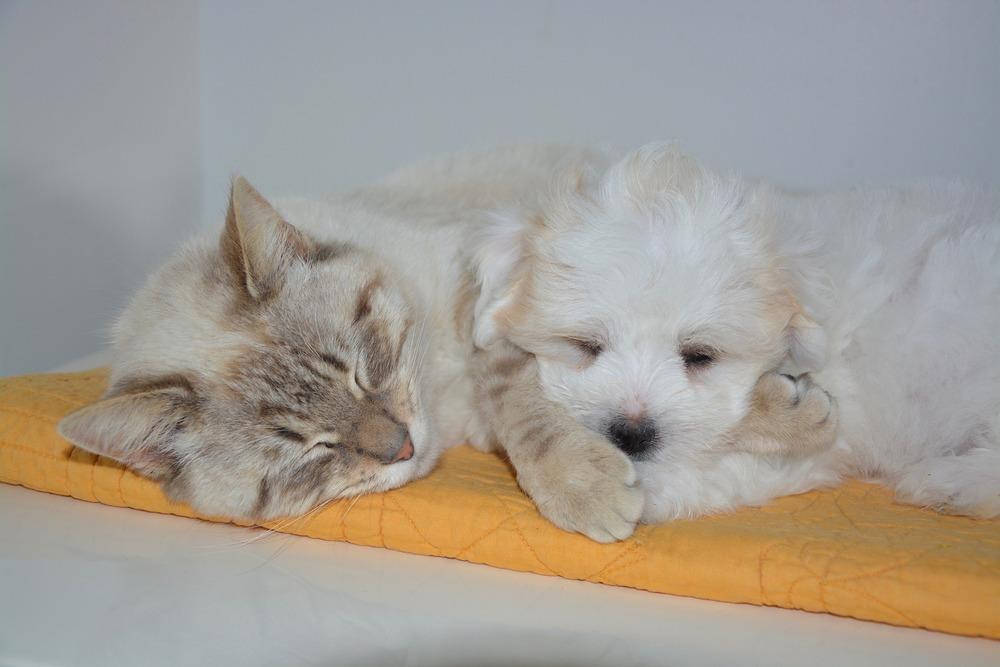 Kot i pies wspólnie odpoczywają na macie.