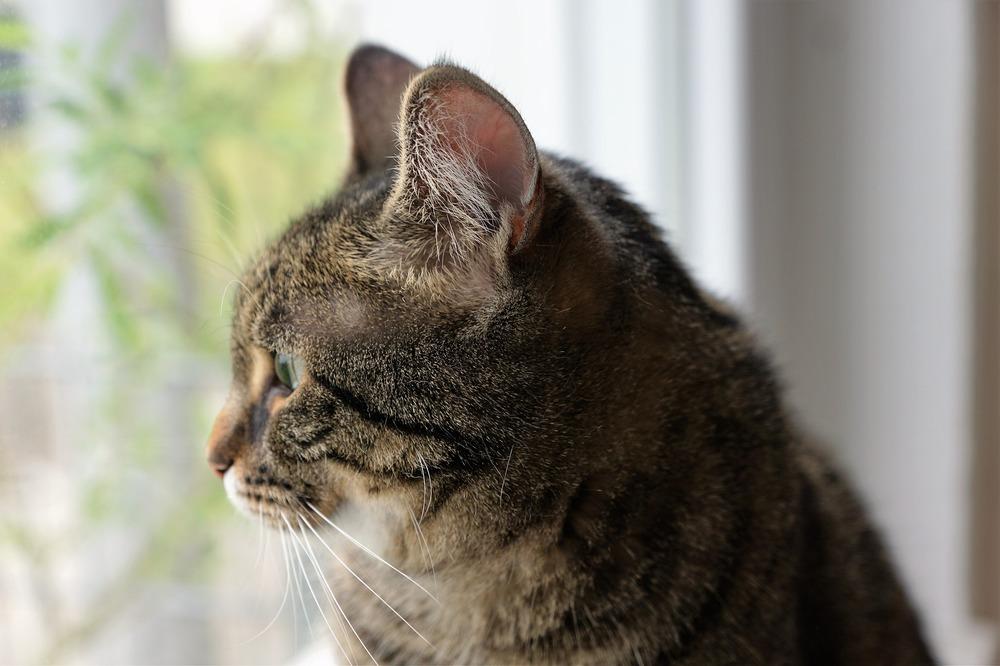 Najczęstszymi przyczynami stresu u kotów są: przeprowadzka, hałas, wyjazd, podróż, remont, samotność, nuda, a także duże tłumy i choroby.