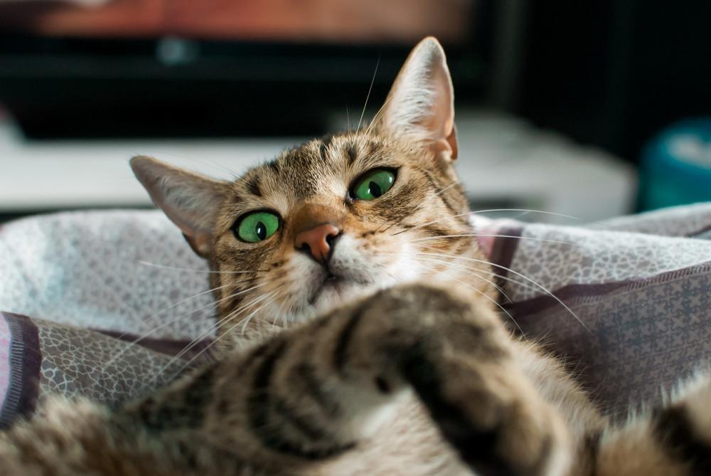 Kuweta dla kota powinna znajdować się w ustronnym i cichym miejscu. Tak, aby kot mógł mieć spokój podczas załatwiania swoich potrzeb fizjologicznych.