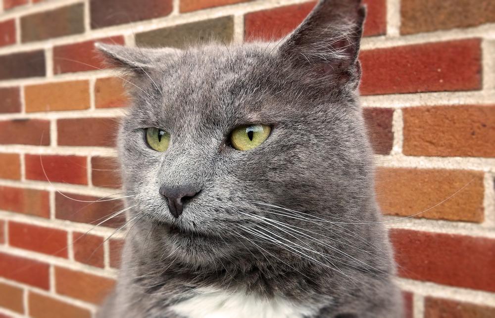 Zniesmaczony kot z intensywnie zielonymi oczami.