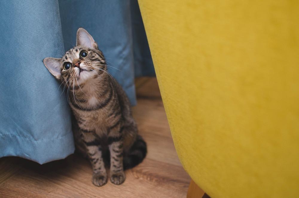 Ciąg łowiecki składa się z paru elementów. Podczas jednego z nich, kot często chowa się za meblami, kartonami i różnymi elementami wystroju.