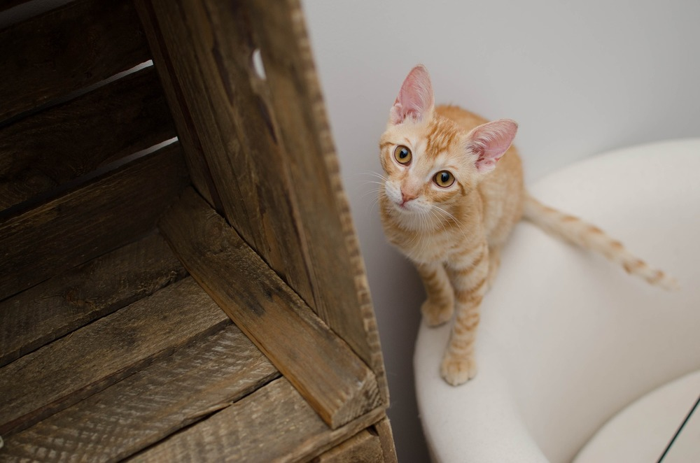 Kuweta dla kota powinna być dopasowana do jego preferencji. Przede wszystkim nie może być za mała. Znaczenie ma również jej wysokość i typ - otwarta - zamknięta.
