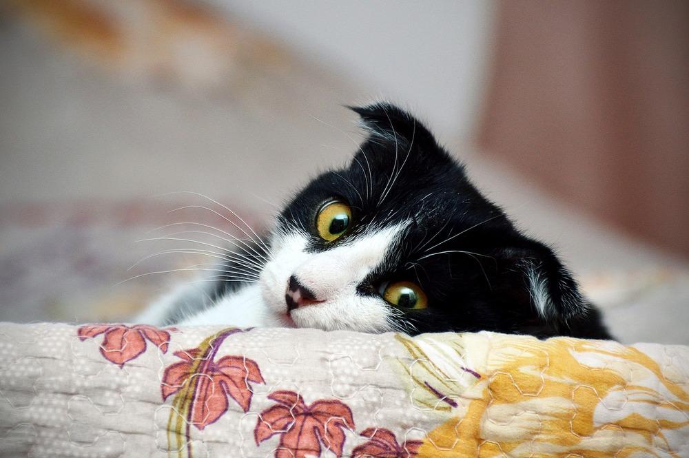 Kot podczas wyjazdu opiekuna lepiej, aby pozostał w znanym sobie miejscu, domu, ale posiadał opiekę osób dochodzących.