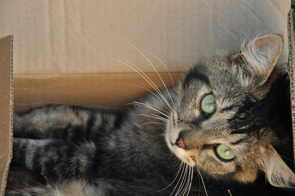 Koty przywiązują dużą wagę do dobrze dobranej kuwety oraz do jej wypełnienia.