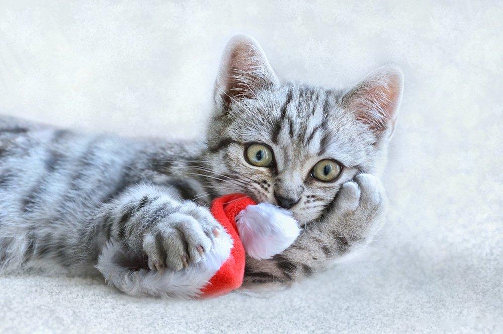 Pluszaki z walerianą lub kocimiętką stanowią świetną zabawkę dla kotów. Odciągają kocią uwagę od bombek i innych świątecznych ozdób.