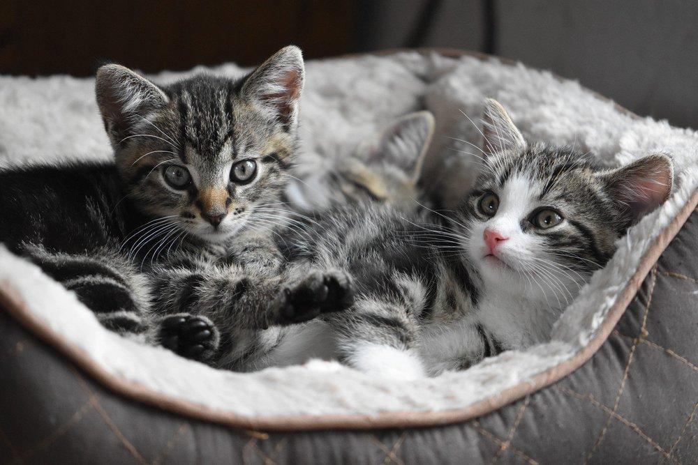 Wyprawka dla kota obejmuje przede wszystkim zapas dobrej, bezzbożowej karmy dla kotów, kuwetę, transporter, zabawki, drapak, legowisko oraz miski.