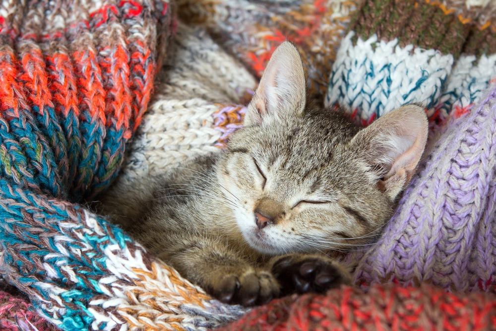 Kociak śpi w kocyku. Biegunka u kociąt i młodych kotów jest szczególnie niebezpieczna ze względu na szybkie odwodnienie się organizmu i utratę masy ciała.