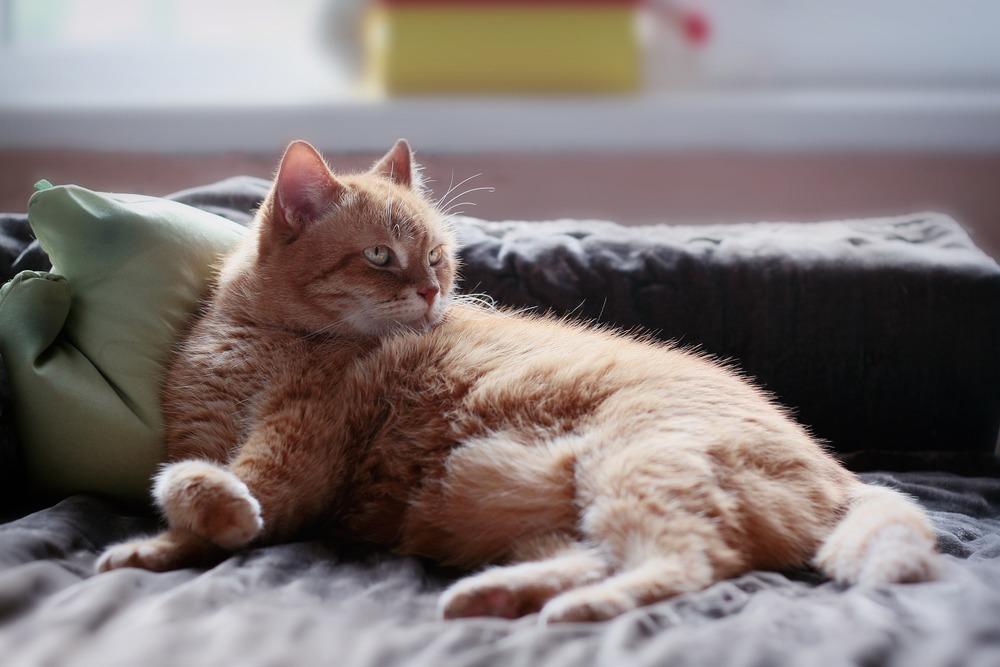 Smutny kot po naszym wyjeździe potrzebuje czasu i zrozumienia zanim dojdzie do siebie.