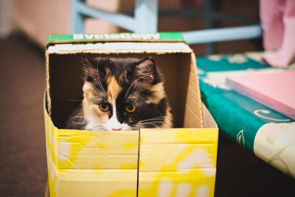 Nie każdy kot zaakceptuje kuwetę krytą. Najbardziej fizjologiczną dla kota kuwetą jest ta otwarta.