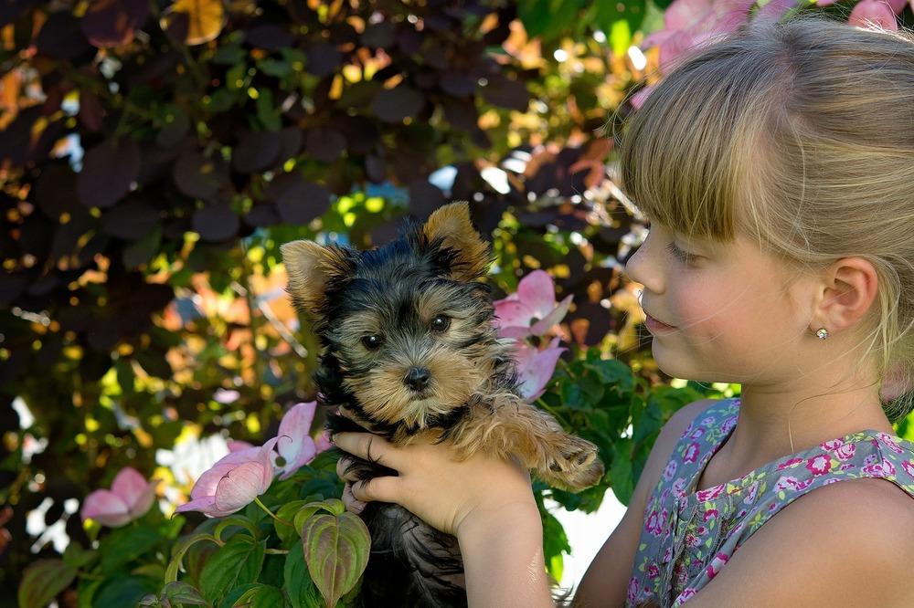 Yorkshire terrier posiadają znikomą ilość podszerstka, ale i one mogą uczulać. Przed decyzją o kupnie psa lub adopcji należy rozważyć, co gdy alergia się jednak pojawi.