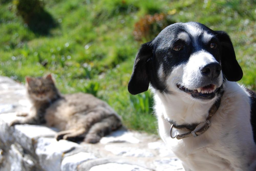 pies i kot siedzą obok siebie na murku. Pies uśmiecha się