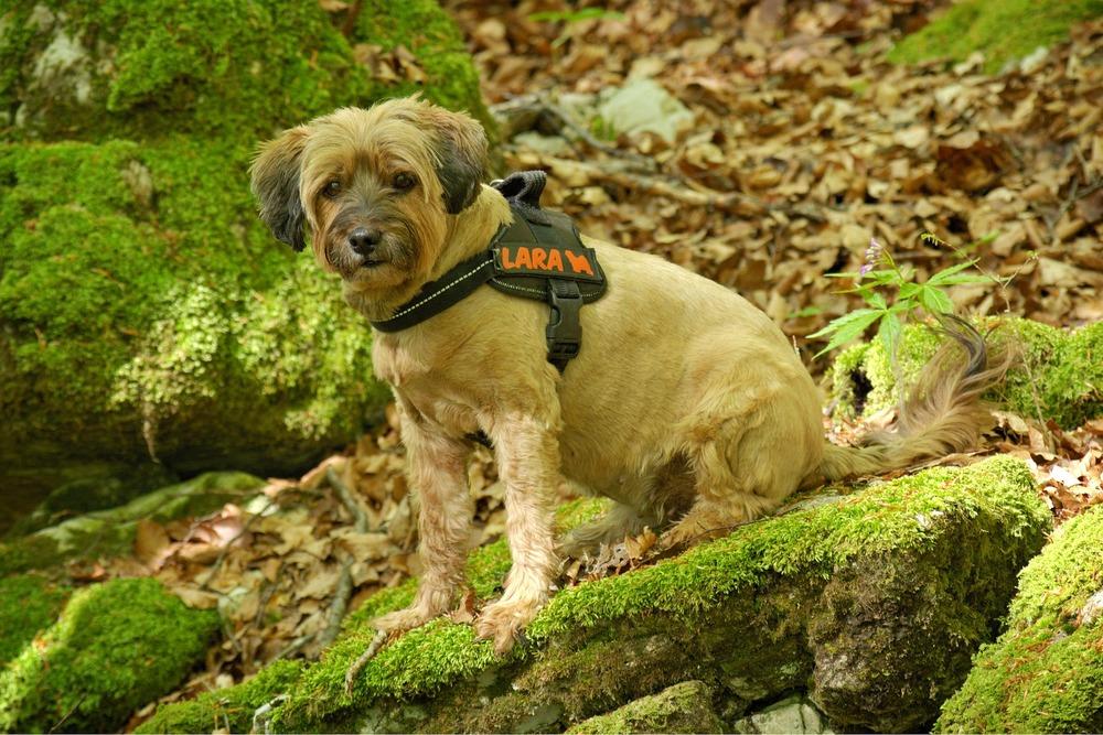 Warto wybrać szelki z odblaskami dla psa. Poprawiają one widoczność i bezpieczeństwo, nie drażniąc psa przy tym.