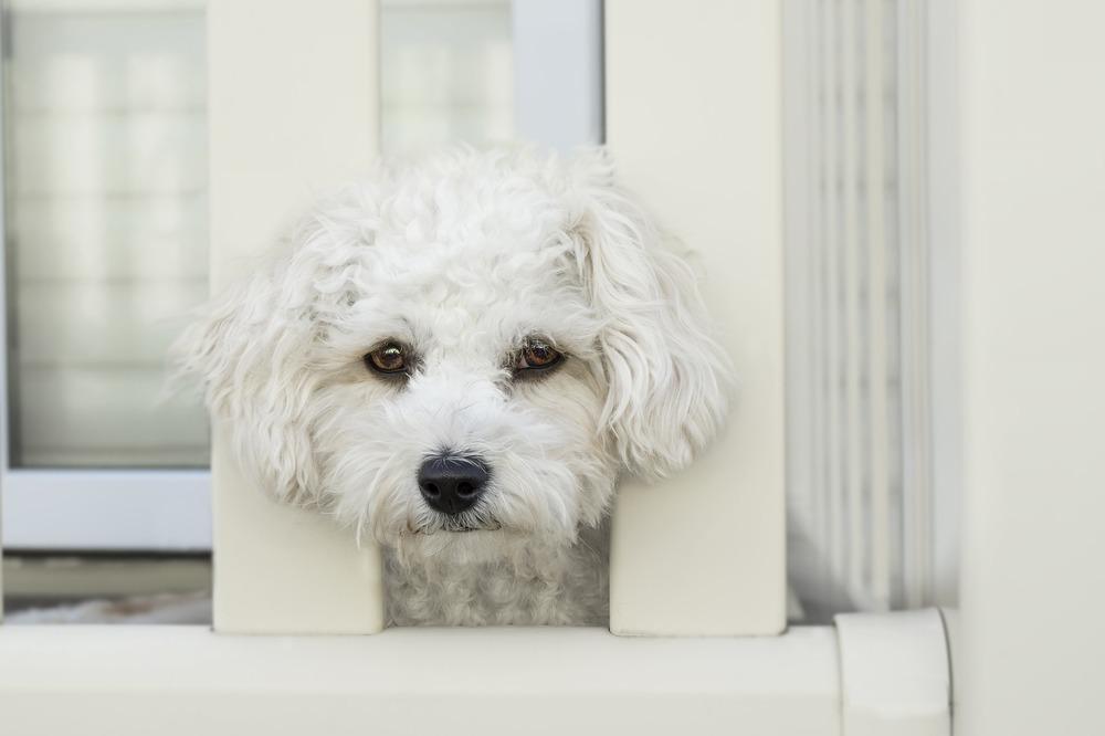 Przyczyną biegunki u psa może być poważna choroba lub zatrucie pokarmowe.