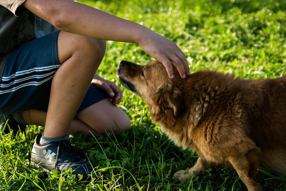 Głaskanie psa. Psy nie przepadają za rozpoczynaniem kontaktu i głaskaniem po wierzchu głowy.