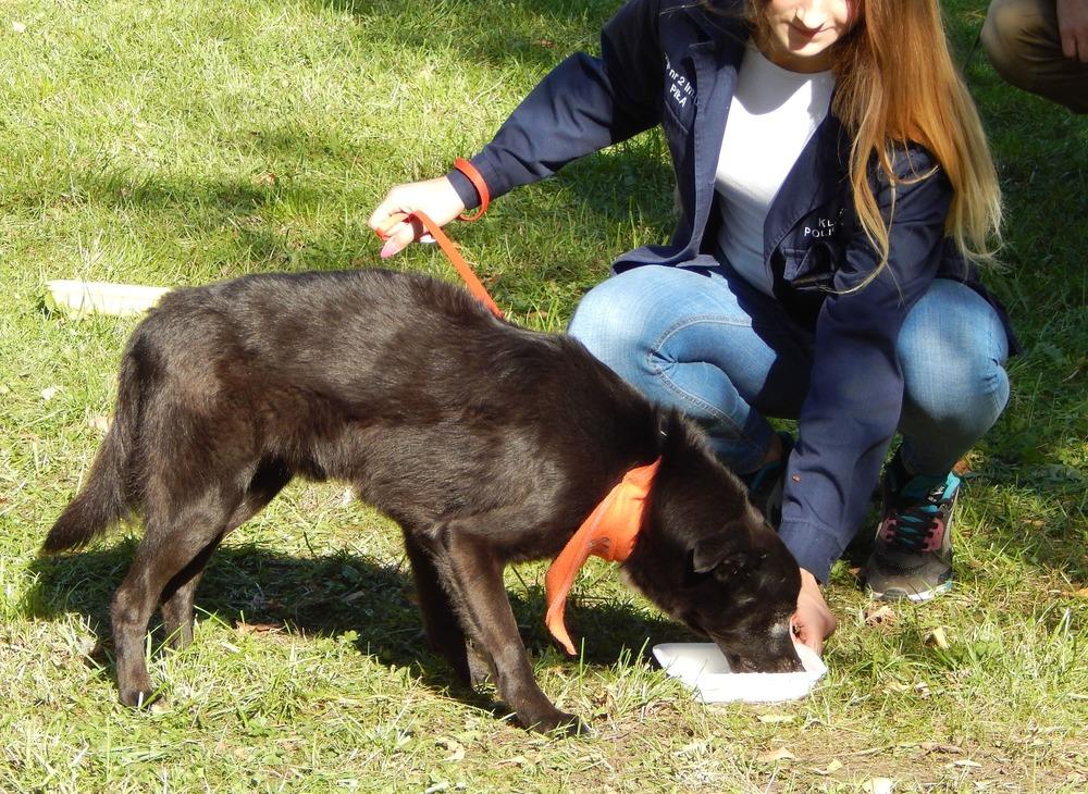 Bandanki odblaskowe dla psów mogą również modnie i estetycznie wyglądać.