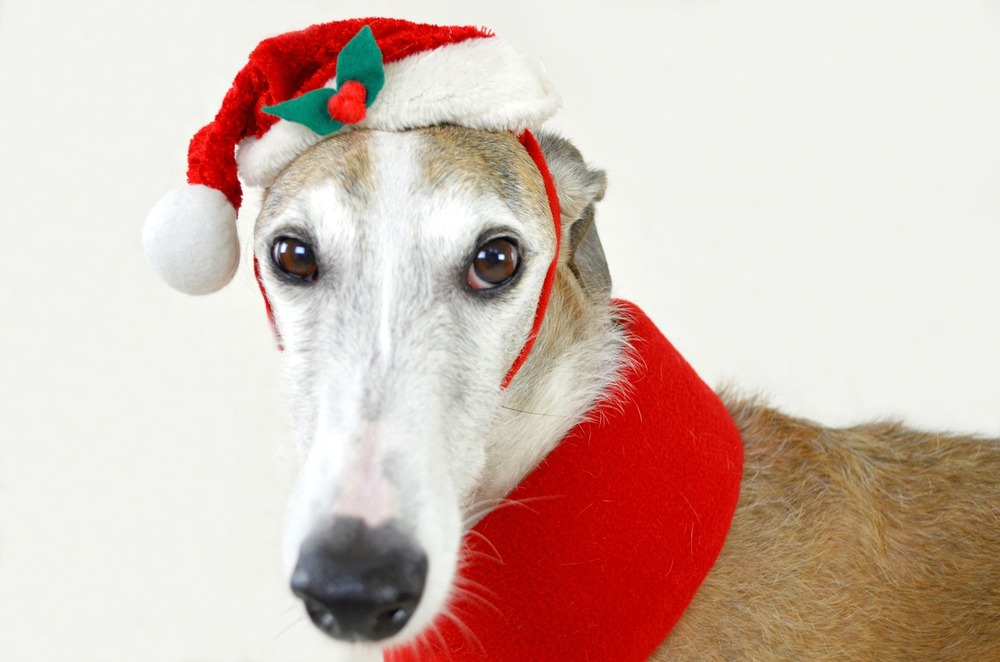 Prezent dla psa powinien go uszczęśliwić. Opiekun psa najlepiej wie jak mu dogodzić, czy będą to przysmaki, ubranko, zabawki czy nowe legowisko.
