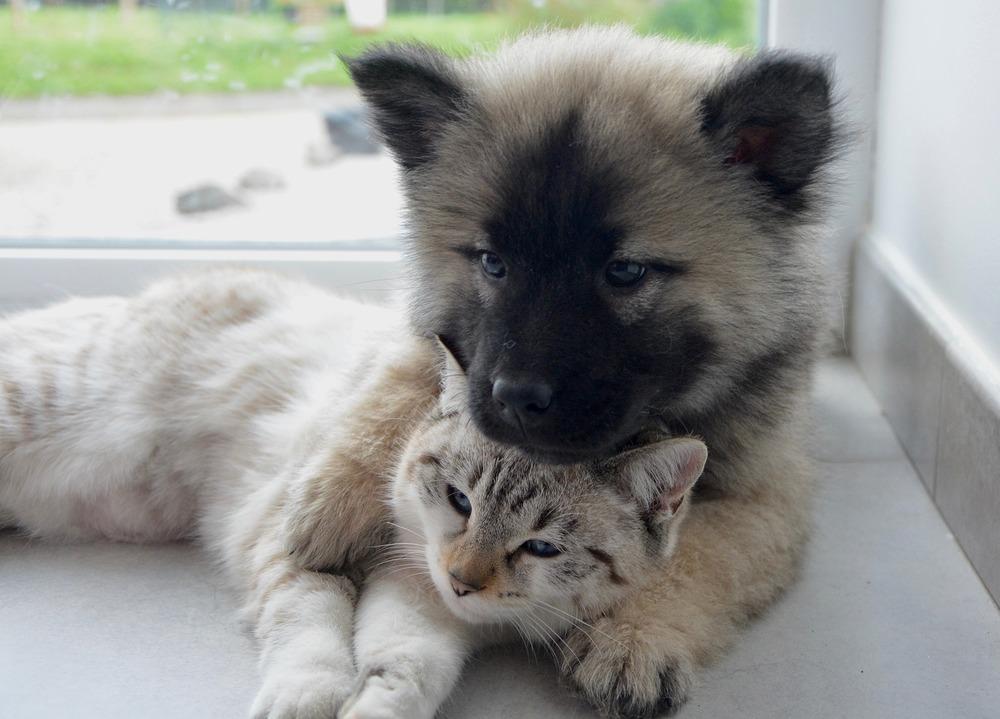 Podczas sytuacji stresowych kot i pies mogą mieć w sobie oparcie, jednak aby do tego doszło potrzebna jest odpowiednia socjalizacja międzygatunkowa.