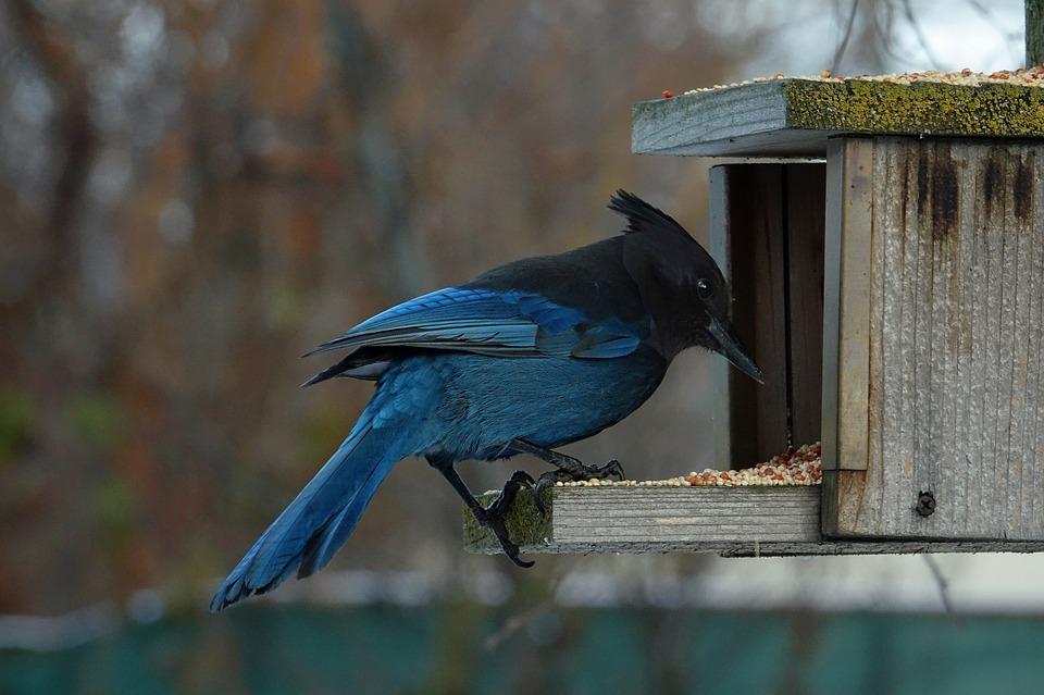Dziki ptak w budce na dworze. Dokarmiać dzikie ptaki można kukurydzą, ziarnami, a nie chlebem.