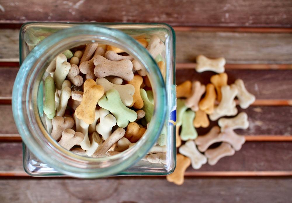 Słoik z przysmakami dla psa. Jak przechowywać suche smaczki?