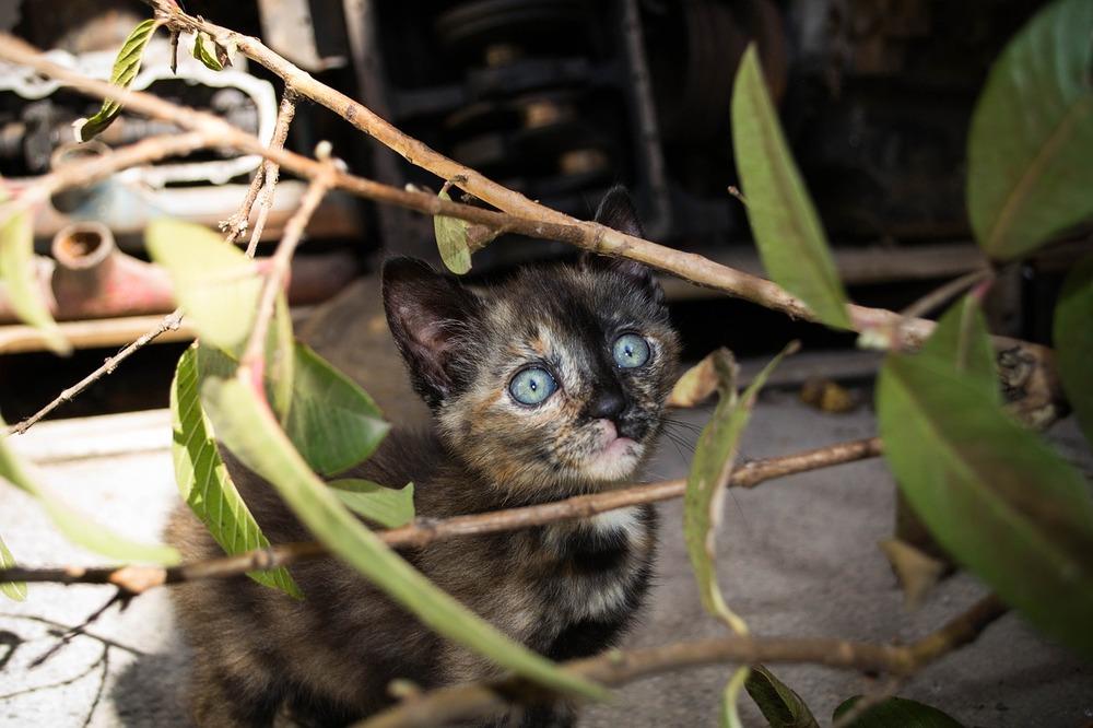 Młody kociak szylkretowy siedzi wśród gałązek.