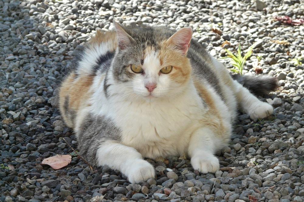 Bardzo otyły kot, w dodatku wychodzący. Otyły kot w żadnym wypadku nie powinien być wypuszczany na dwór, nie jest on w pełni sprawny ruchowo, więc wypadek i śmierć to kwestia krótkiego czasu.