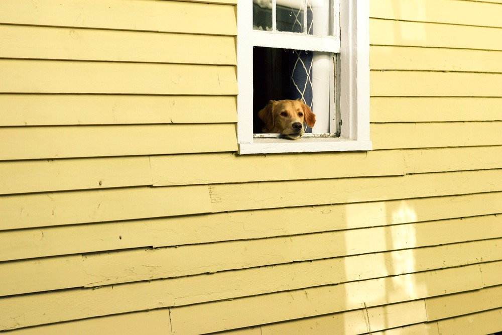 Lęk separacyjny może dotknąć każdego psa. Warto zapobiec temu zjawisku i od szczeniaka uczyć psa pozostawiania samemu w domu.