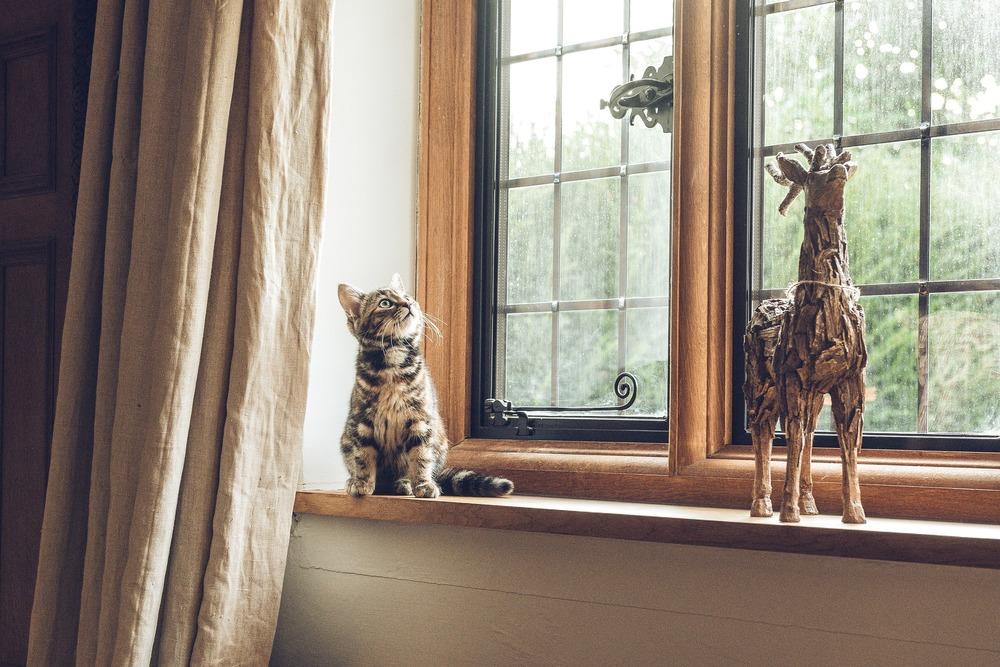 Jeżeli nie chcesz, aby kot wchodził na niektóre powierzchnie to zapewnić mu inną dobrą dla niego alternatywę. Szczególnie jest to istotne przy kociakach, które mają bardzo dużo energii i potrzebę eksploatacji różnych miejsc.