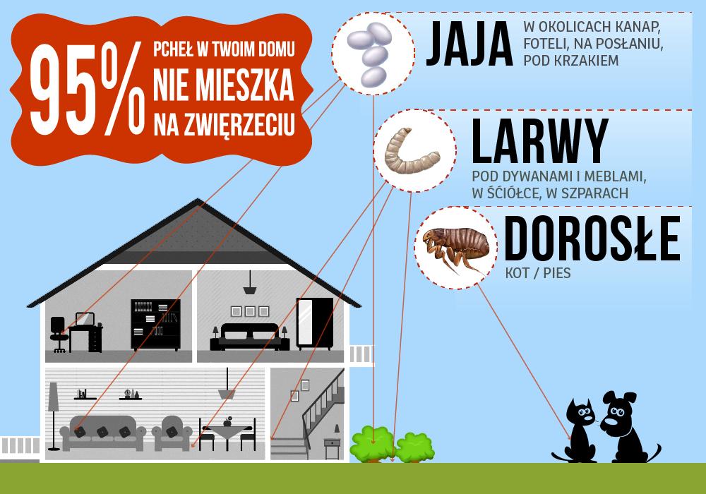 95% pcheł w Twoim domu nie mieszka na zwierzęciu tylko np. w kanapach, na dywanach, w ściółkach, itp.