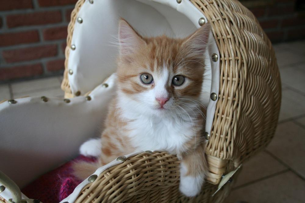 Legowisko dla kota powinno znajdować się w cichym i spokojnym miejscu. Dobrym pomysłem jest ustawienie legowiska w sypialni, lub w salonie, ale w ustronnym miejscu.