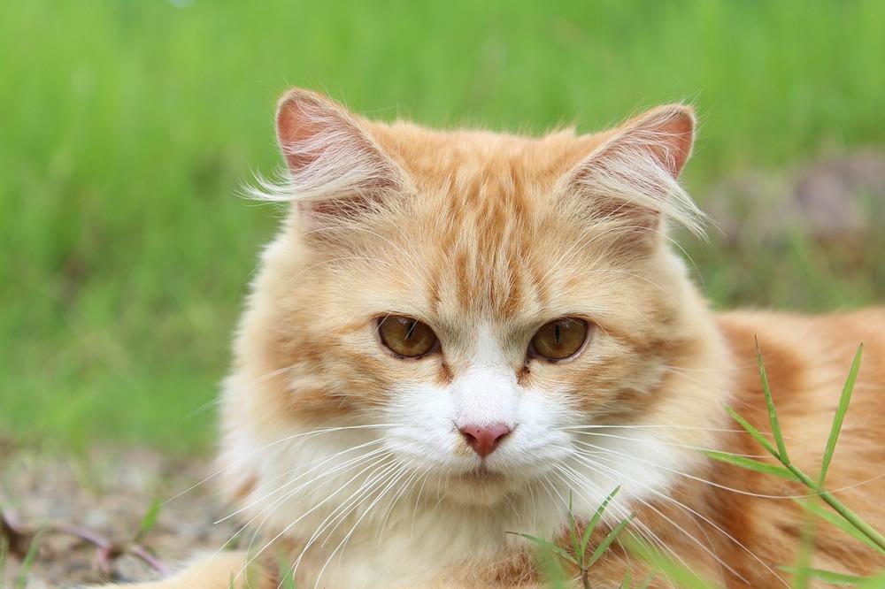 Rudy kot na dworze, koty wychodzące mają większe szanse na złapanie kataru i choroby.