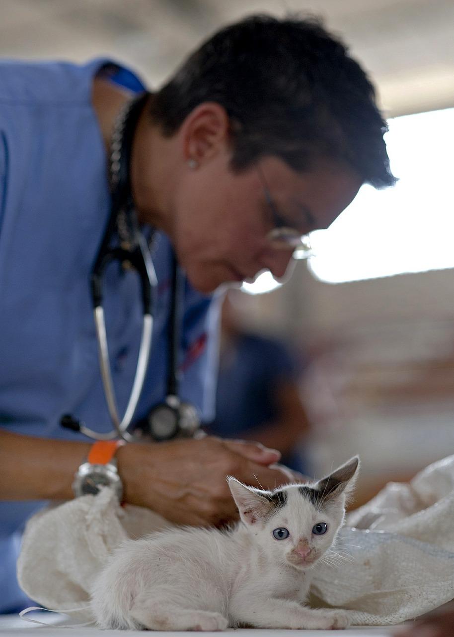 Młody kociak na stole weterynaryjnym. Weterynarz przygotowuje się do przeprowadzenia zabiegu.