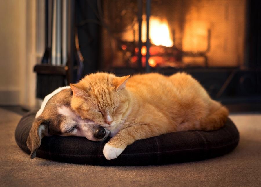 Szczeniak i kot śpią przytuleni na legowisku przy kominku.