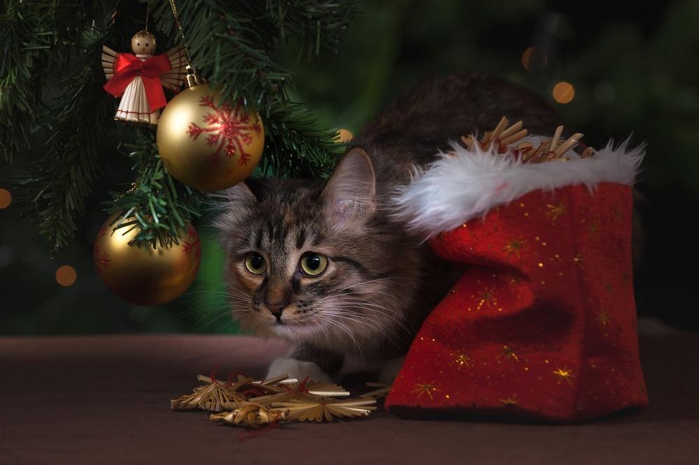 Kot zestresowany chaosem podczas przygotowań do świąt. Siedzi pod choinką, przy worku na prezenty.