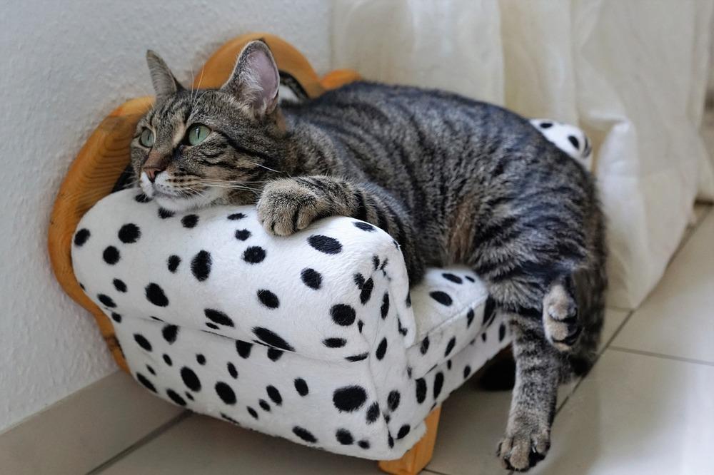 Kot wyleguje się na kanapie dla kota.