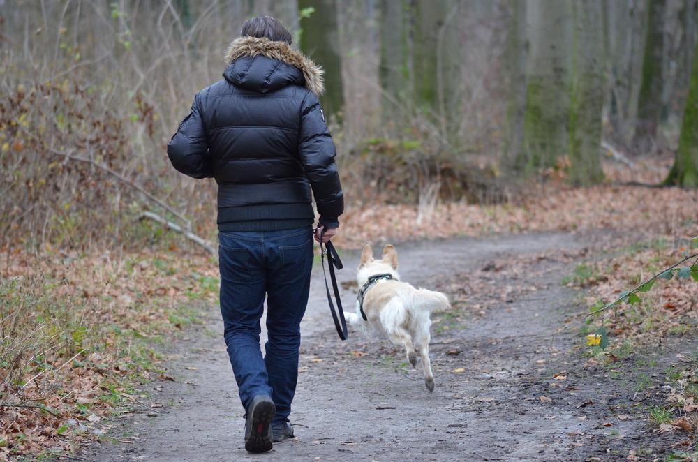 Dla własnego bezpieczeństwa oraz dla bezpieczeństwa psa zawsze powinniśmy wyprowadzać go na smyczy. Nawet w lesie czy na polanie czyhają groźne niebezpieczeństwa. Można zastosować smycze z dalekim zasięgiem, aby pies mógł swobodnie biegać.