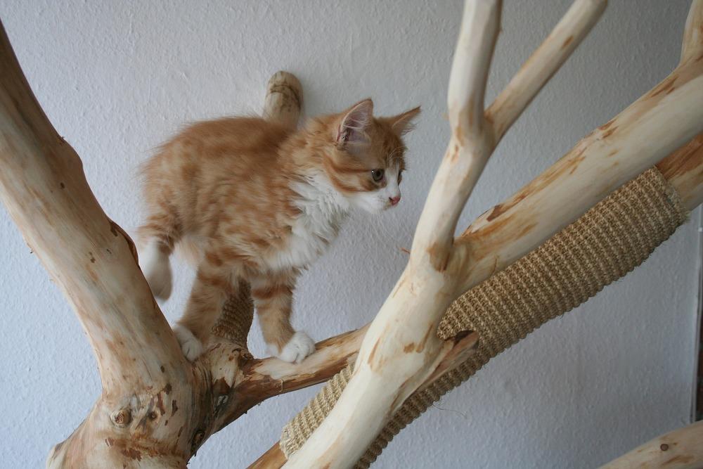 Od małego warto ukierunkowywać drapanie kota na przeznaczone ku temu powierzchnie - drapaki dla kotów. Mogą być w naturalnej formie, czyli drapaków z drzewa, które ozdobią mieszkanie.