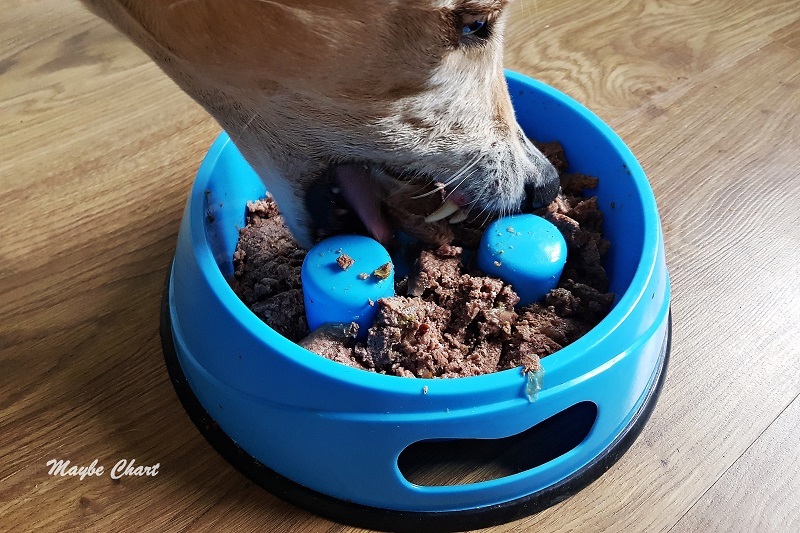 Pies je z miski spowalniającej. Miski z wypustkami utrudniają jedzenie pokarmu i spowalniają ten proces.