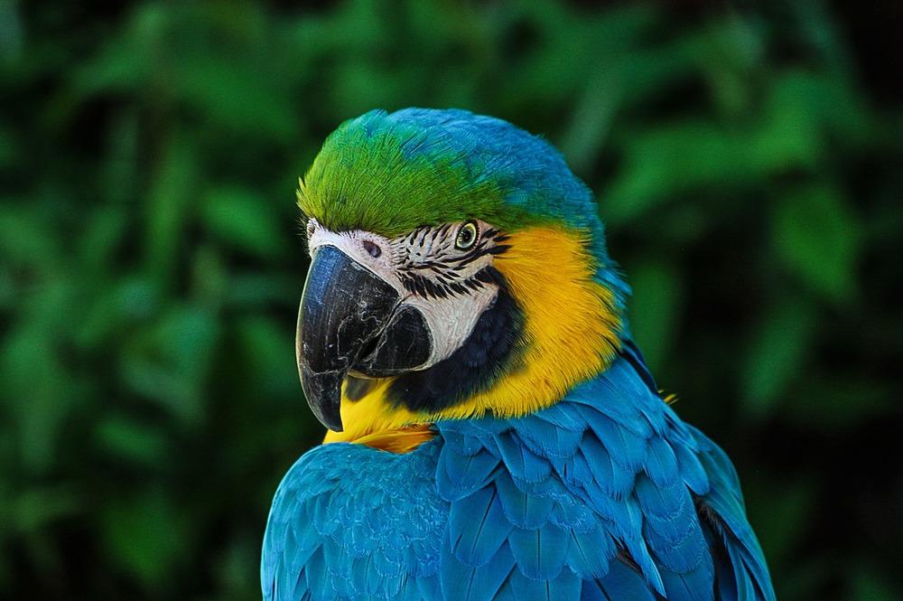 Papuga ara potrzebuje odwzorowania jej naturalnego środowiska. Przy za małej klatce i złym żywieniu papugi te marnieją i podupadają na zdrowiu.
