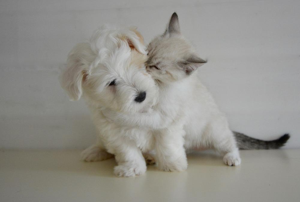 Jak zabezpieczyć psa i kota przed pasożytami zewnętrznymi?