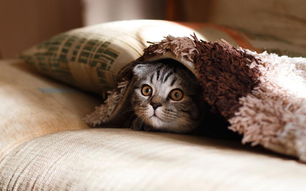 Schowany kot. Nagła zmiana zachowania kota, unikanie kontaktu oraz chowanie się może oznaczać pogorszenie stanu zdrowia lub samopoczucia.