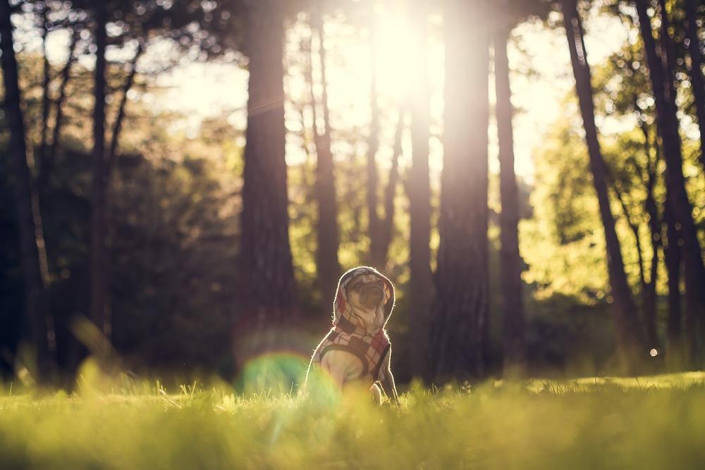 Aktualnie kleszcze można spotkać właściwie wszędzie, nie tylko w lasach czy na łąkach. Pies powinien być zatem chroniony cały rok, niezależnie od tego gdzie wychodzi najczęściej.