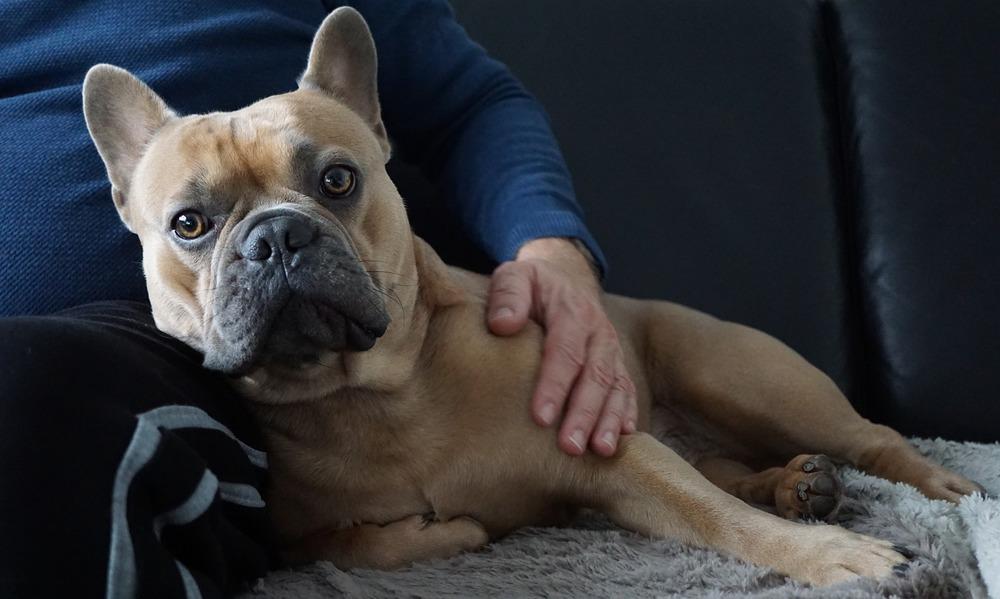 Przytulanie psa przynosi wiele korzyści, zarówno dla człowieka jak i samego psa.