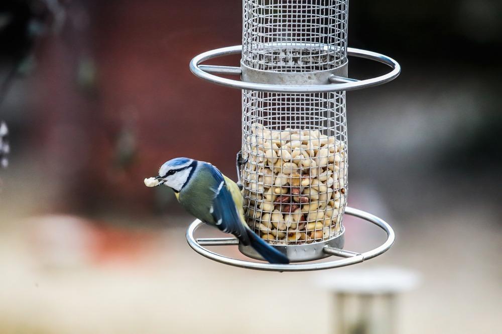 Karmniki z zasobnikiem są najbardziej higienicznym rozwiązaniem, gdyż ptaki nie są w stanie zanieczyścić pokarmu.