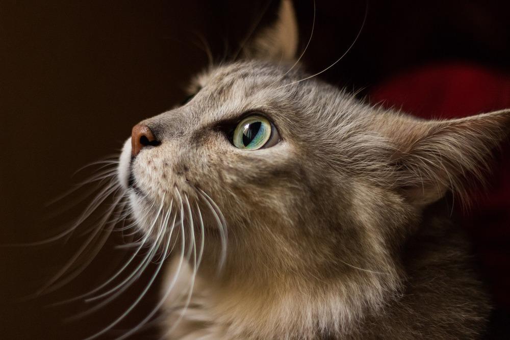 Dieta BARF dobierana i tworzona jest dla każdego kota indywidualnie, biorąc pod uwagę m.in. wyniki badań krwi, stan zdrowia, kondycję, wiek i masę ciała kota. Nie można kotu podawać mieszanki stworzonej dla innego osobnika.