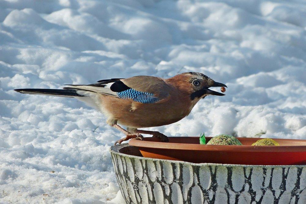 Kule tłuszczowe są praktyczne do dokarmiania ptaków. W łatwy sposób można je podać, a ptaki mogą się zatrzymać na siateczce i wydziobywać karmę między oczkami.