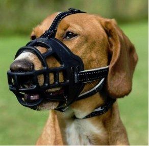 Kaganiec fizjologiczny. Najlepszy możliwy dla psa. Pozwala mu na swobodne oddychanie, ziajanie, napicie się wody